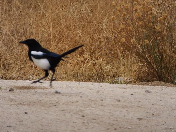 アウトレット鳥00_2日目3ラスロサスビレッジアウトレット_ある日本人観光客のスペイン旅行記